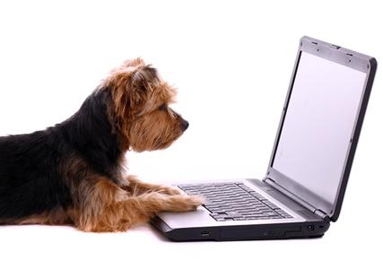yorkie at computer