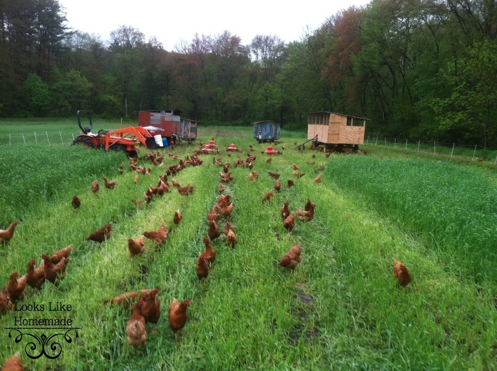 Resources for Sourcing Humanely Raised Meat & Poultry